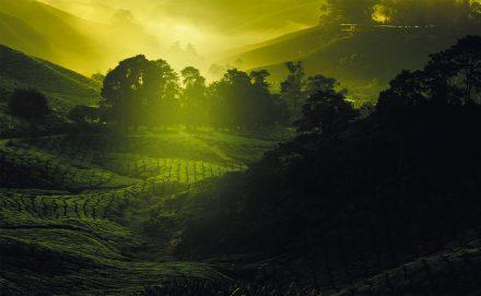 Das Trendgetränk Kusmi Tea