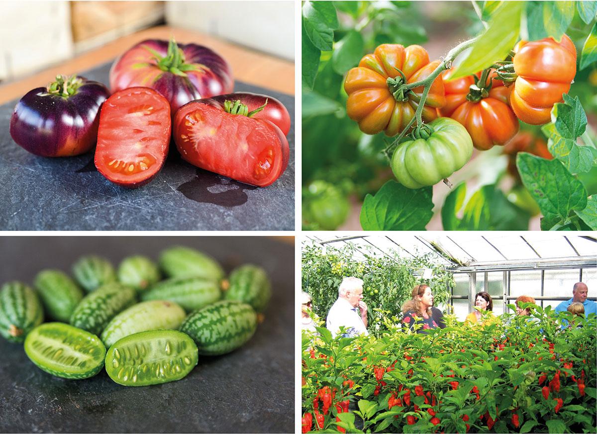 Tomate, Tomatensorten, Bio-Hofladen