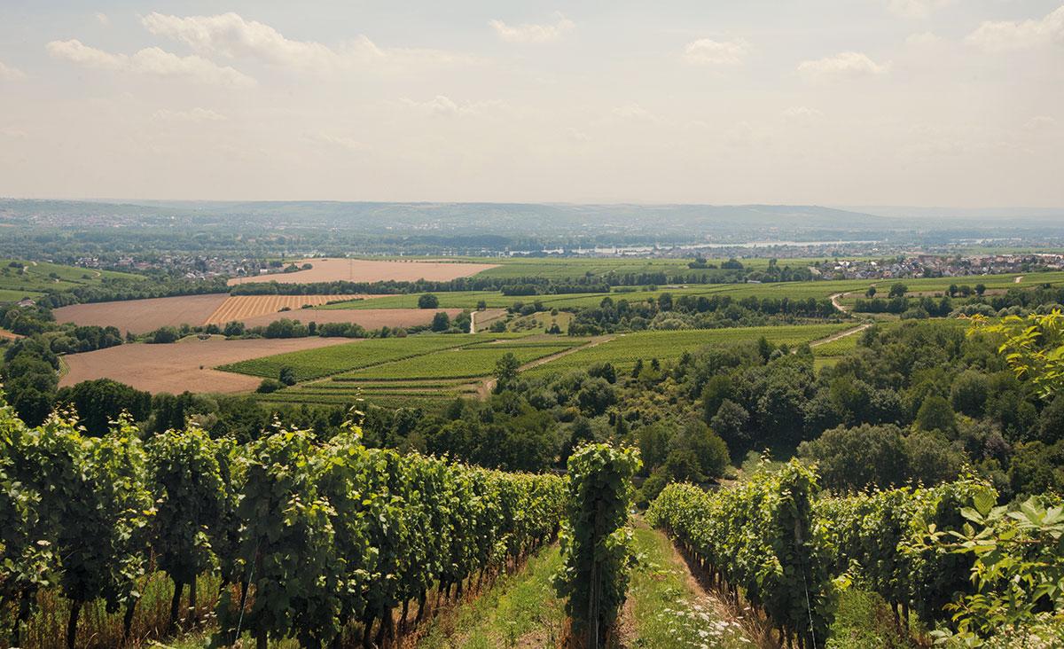 Kloster Eberbach. Blick vom Steinberg ins Rheintal