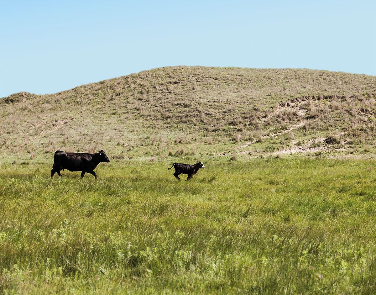 otto gourmet Wagyu von der Morgan Ranch in Nebraska