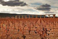 Vega Sicilia, Weingut, Bodega, Rotwein, Rioja, Vinzer, SPanien