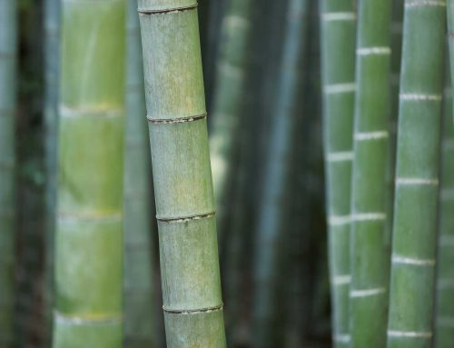 Alternative Bambus