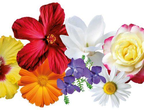 Flower-Power: Blüten in der Kosmetik